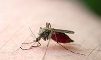罪犯无处可逃!新技术可在48小时内通过吸血蚊子寻找犯罪证据