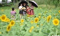 杭州市民周末富阳看花海