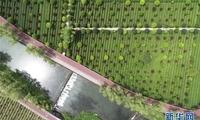 把梦想实现在山水间——陕南乡村旅游带动创客下乡热