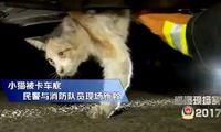 上海警察协同消防员 解救被困车底流浪猫