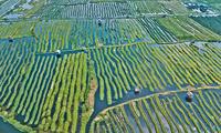 """出访缅甸,陈毅元帅也曾作诗说这里的浮岛""""世间无"""""""