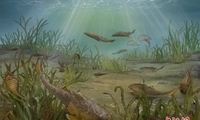 重庆发现距今约4.23亿年前新属种