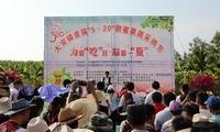 """乐东大安镇举办首届""""5·20""""甜蜜果蔬采摘节活动"""