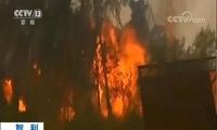 智利南部森林火灾肆虐 已致两人死亡