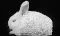 """也许下一个冬天 北极熊同款""""毛衣""""会为你带温暖 浙江科技澳门正规博彩十大网站网_浙江在线"""