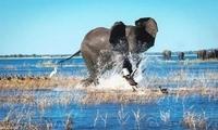 野生动物摄影作品!自然野性之美