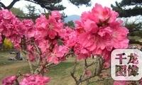 """初春风光好 北京10处最佳""""春景""""景观"""