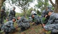 解放军驻港部队参加香港植树日活动